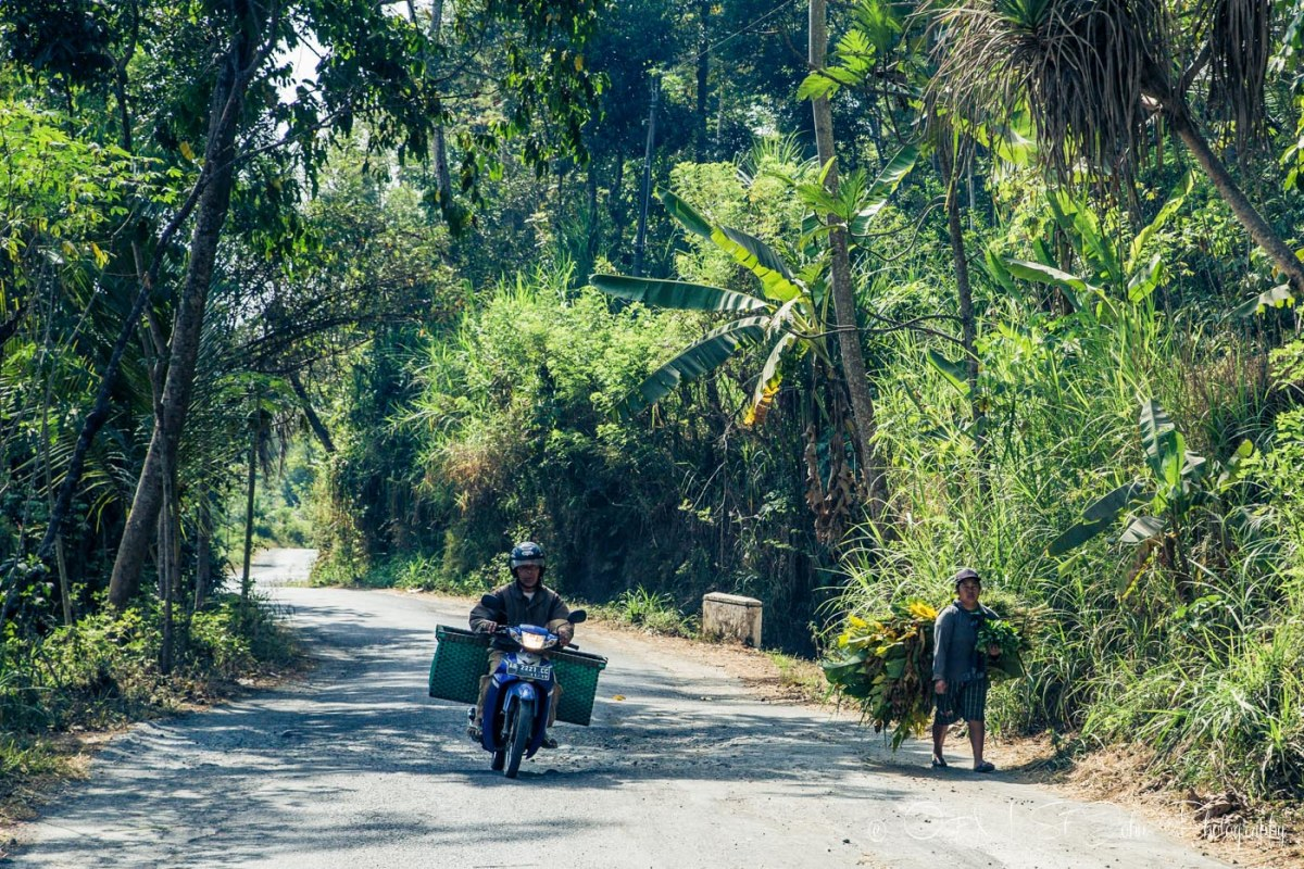 Sharing the road with the locals. outside of Yogyakarta. Java. Indonesia