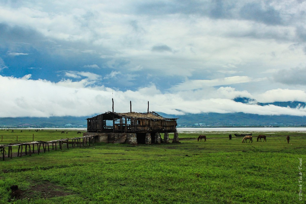 Horses in an open field, with Lugu lake in the background. Outside of Lijiang, China