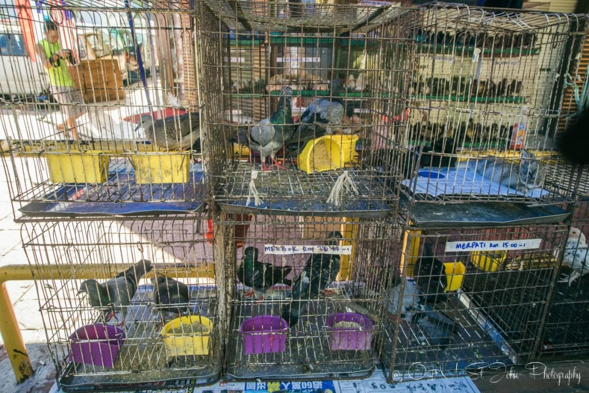 Pigeons for sale at the Gaya Street Sunday Market, Kota Kinabalu. Sabah. Malaysia