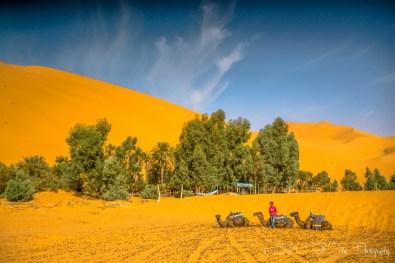 Oasis in the Sahara Desert, Erg Chebbi. Morocco