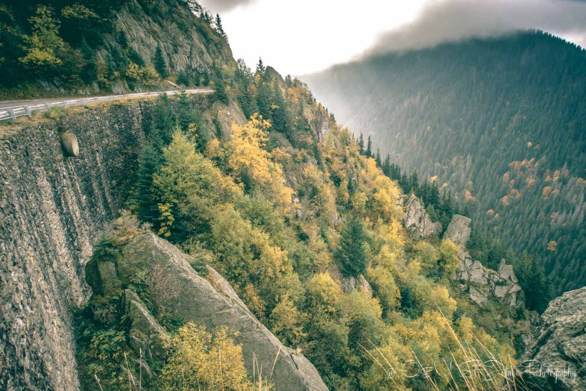 Thick forest lines the Transfagarasan Highway. Road trip in Romania