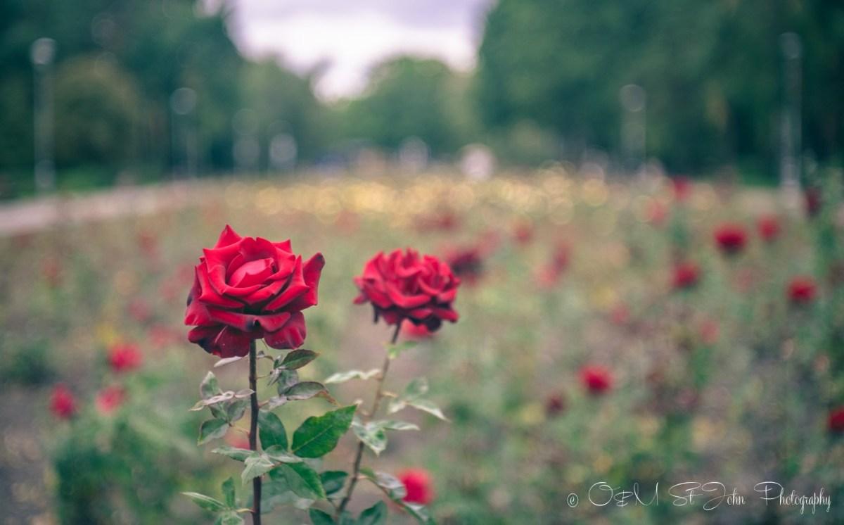 Flowers in Kiev, Ukraine
