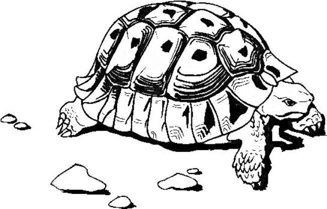 Tartarughe disegni per bambini da stampare for Disegno terra da colorare