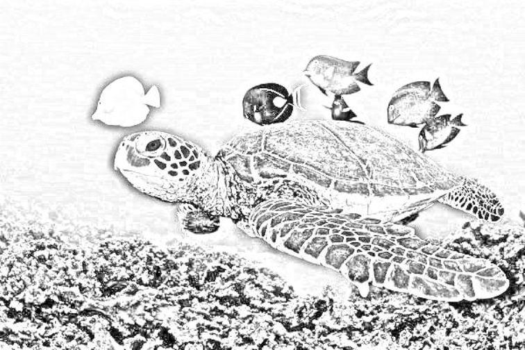 Tartarughe disegni per bambini da stampare for Disegni marini da colorare