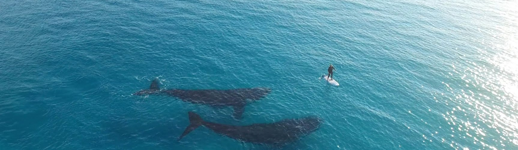 Stunning Drone Footage Of A Paddleboarder's Encounter With Two Whales