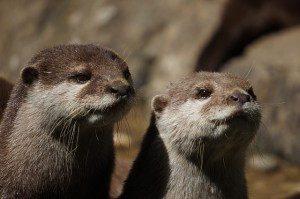 we otter ask each other some of these questions