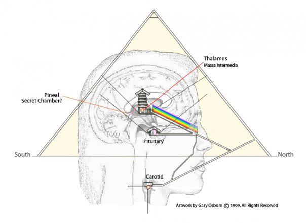 Pineal pyramid Pineal Gland Part 1 – Portal of Higher Dimensions
