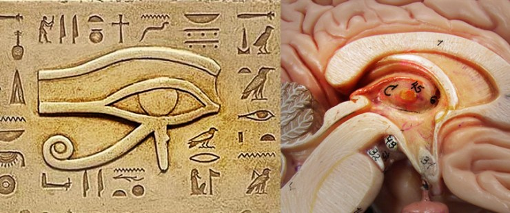 pineal gland and eye of horus Pineal Gland Part 1 – Portal of Higher Dimensions