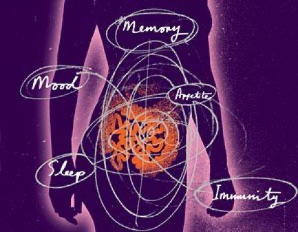 gut health-memory-mood-appetite-immunity-gut-1010-298x232