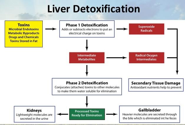 liver-detoxification-5-638