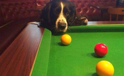 dogs-pool