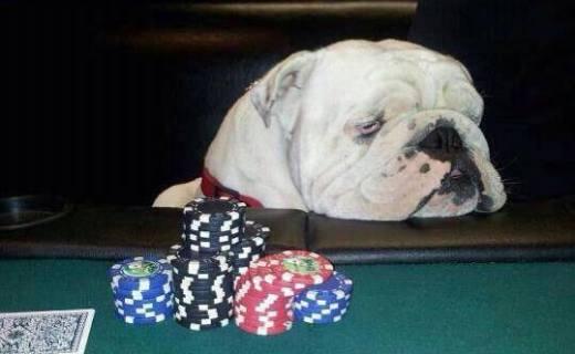 dugs-n-poker