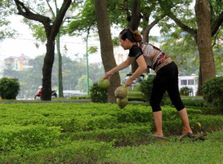 Vứt dừa vào những bụi cây