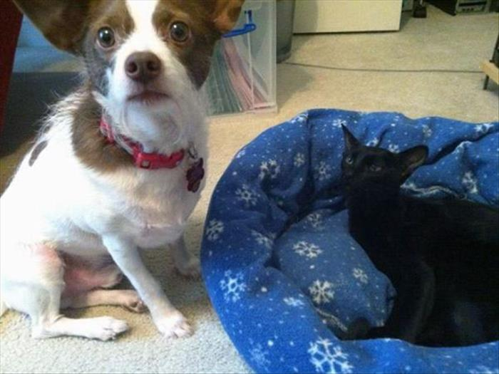 cats and dog beds (2)