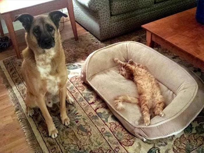 cats and dog beds (21)
