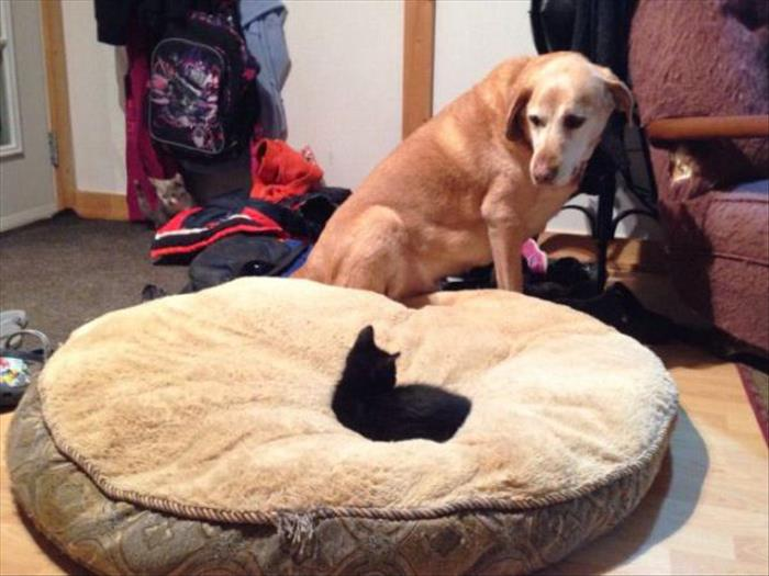 cats and dog beds (5)