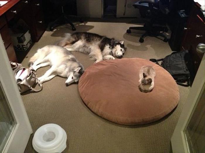 cats and dog beds (8)