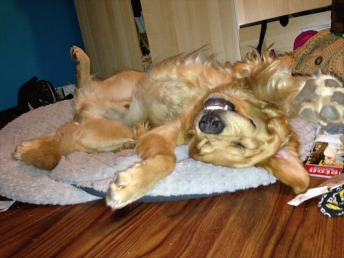 sleeping dogs (3)