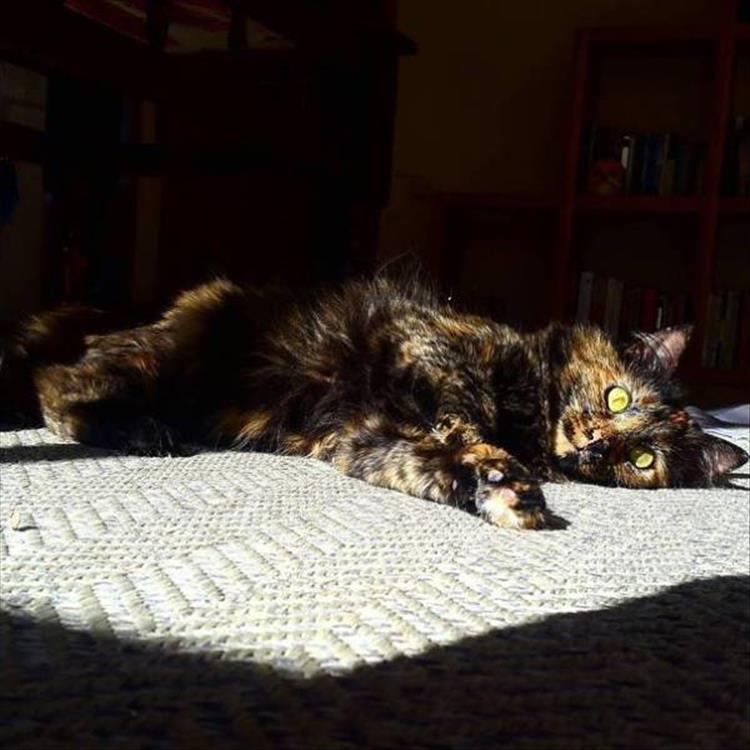 cats (9)