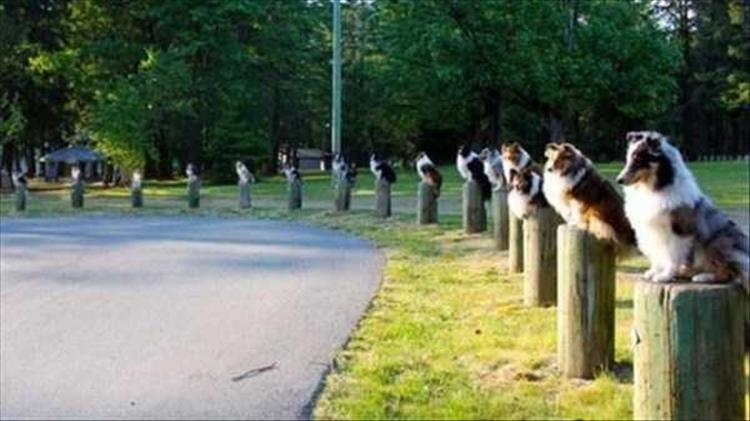 dogs on posts