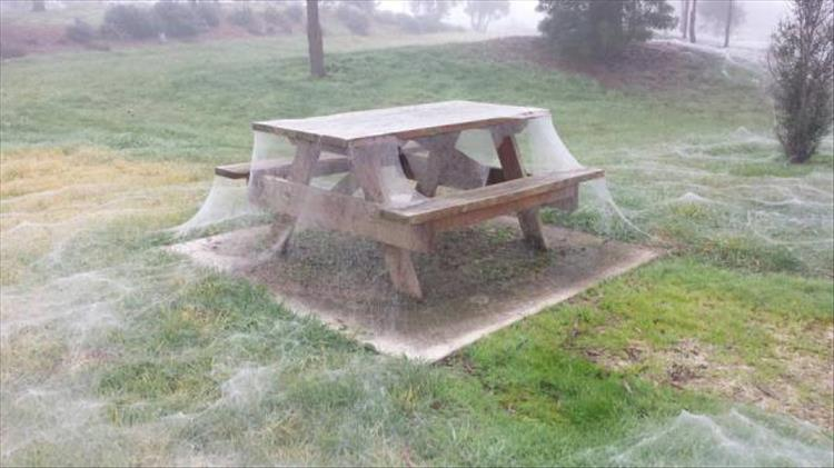 picnic table spiderweb