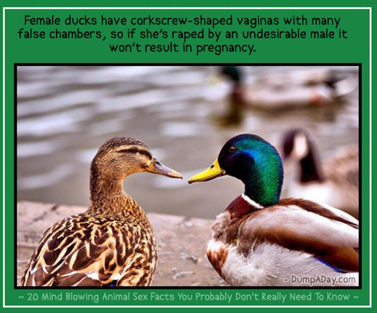 animal facts (11)