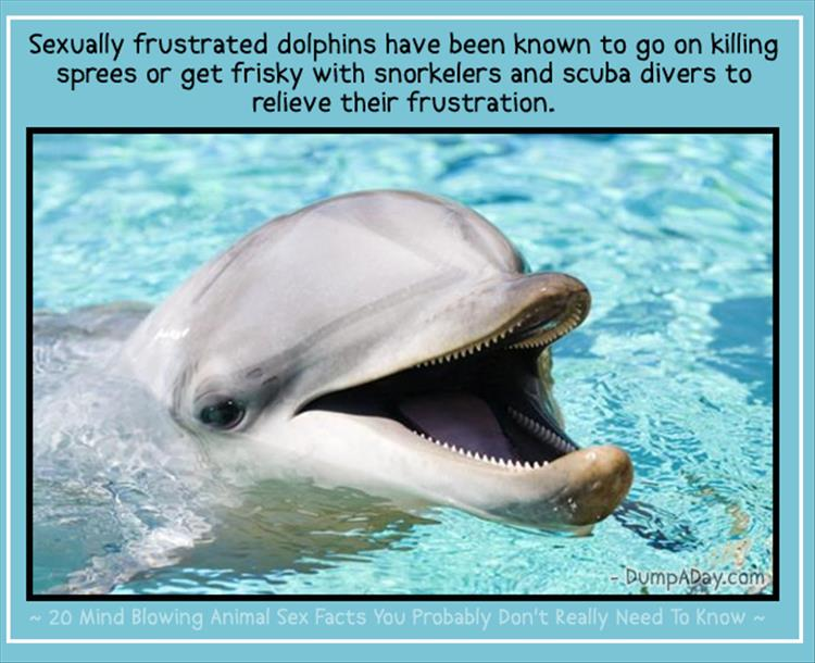 animal facts (9)