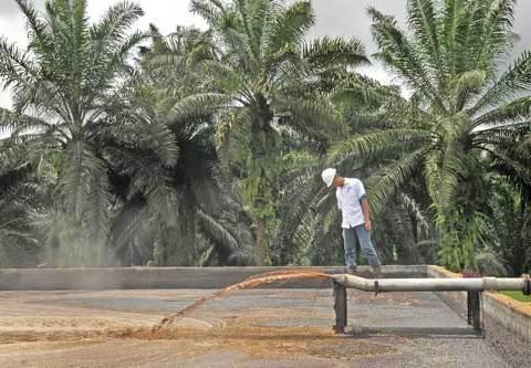 Limbah produksi minyak sawit yang mengandung gas methane dan dapat membangkitkan listrik.