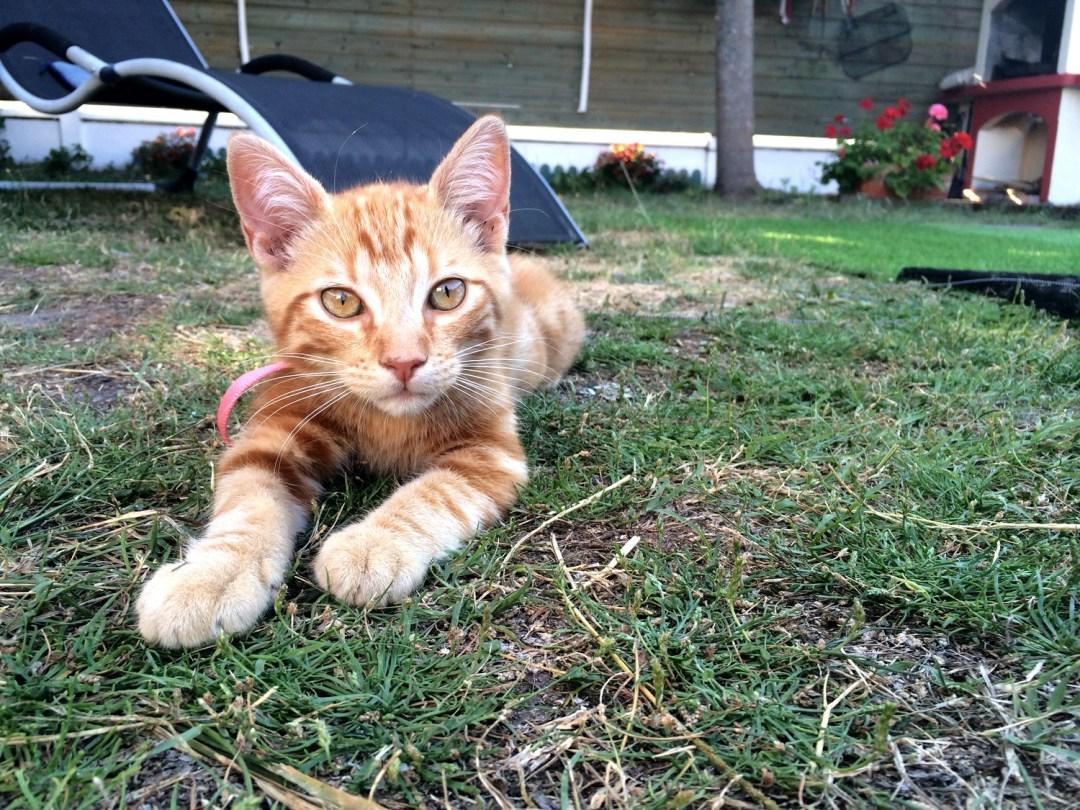 SOS bébé chat recherche famille dutalonaucrampon blog voyage corse 10