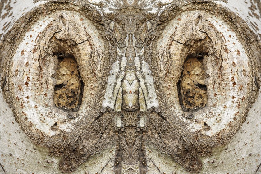 Bestiario-Guillem_Vidal-20