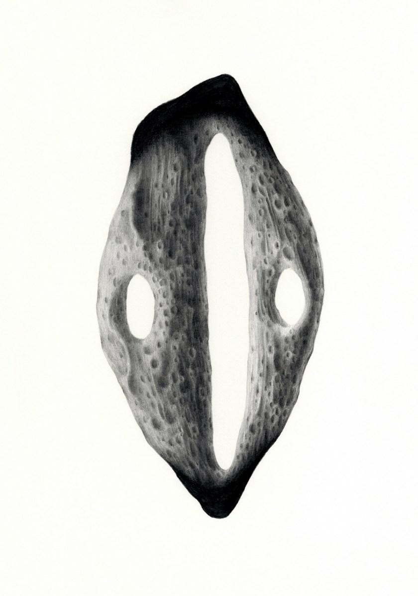 felipe-ortega-regalado-amor-vegetal-de-huerto-y-de-bosques-08