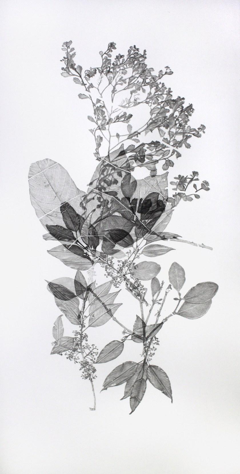 gabinete-de-dibujos-ernesto-casero-las-plantas-perdidas-02