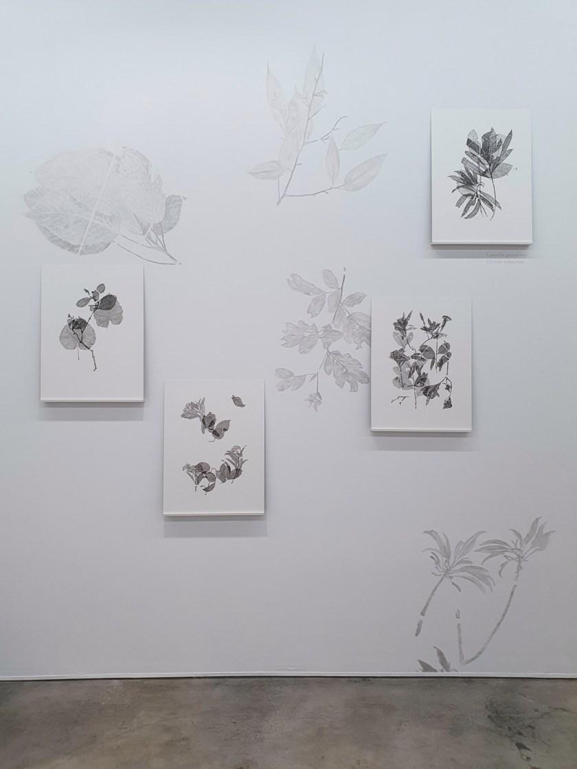 gabinete-de-dibujos-ernesto-casero-las-plantas-perdidas-09