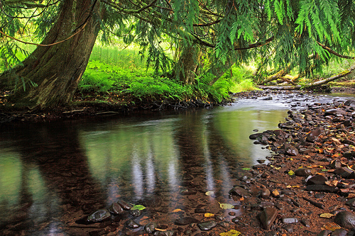peaceful creek with shade trees
