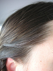 close up of gray hairs in brunette head