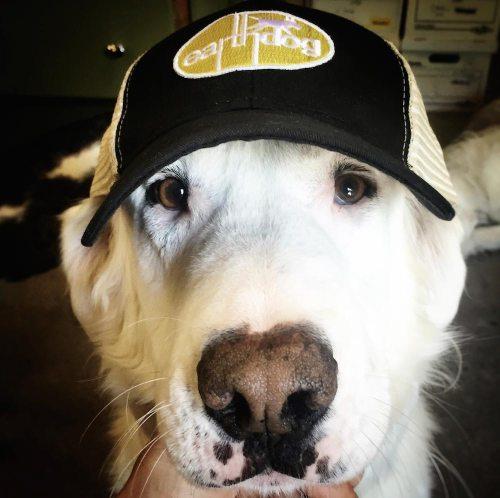 Medium Of Dogs In Hats