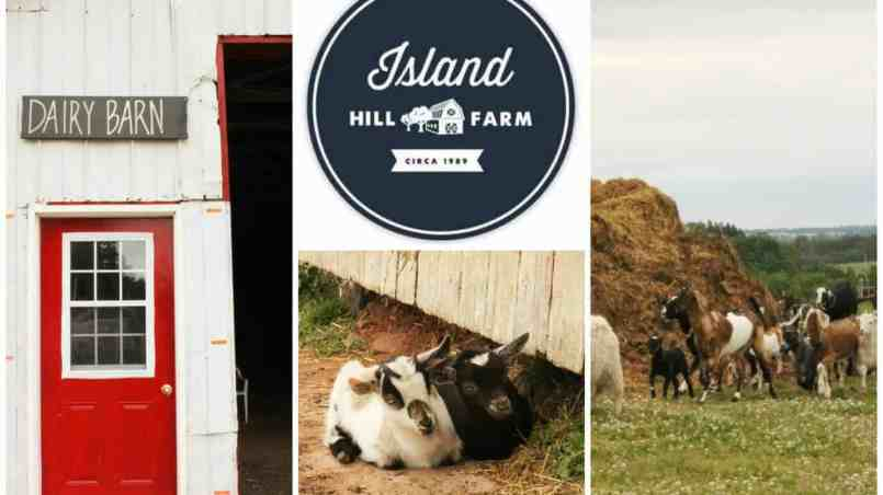 Island HillFeature pic
