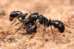 Small Of Diatomaceous Earth Ants