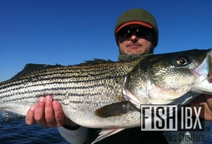 Striped bass charters fishibx eastern nc fishing guide for Striper fishing nc