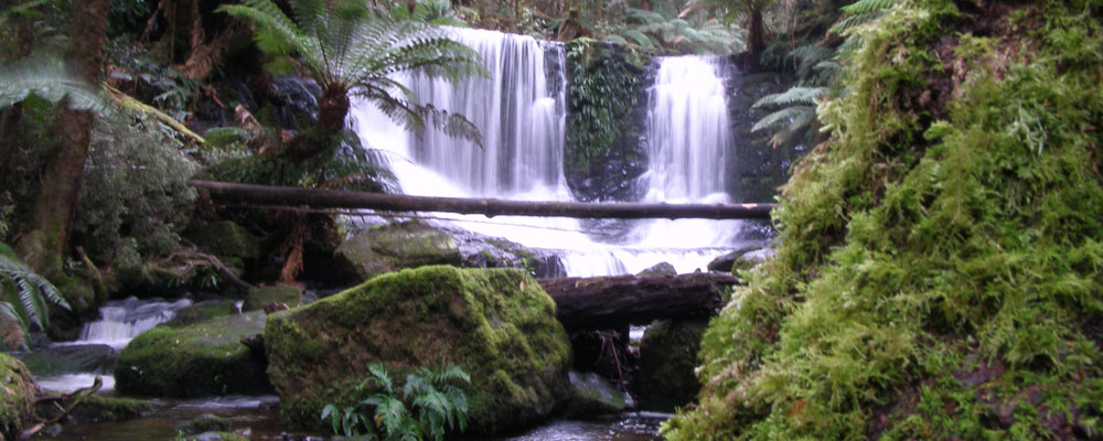 Horseshoe Falls near Russell Falls in Mt Field National Park