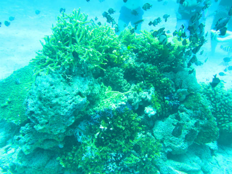 Corals with lots of small fish
