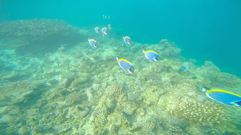 Baros Maldives House Reef