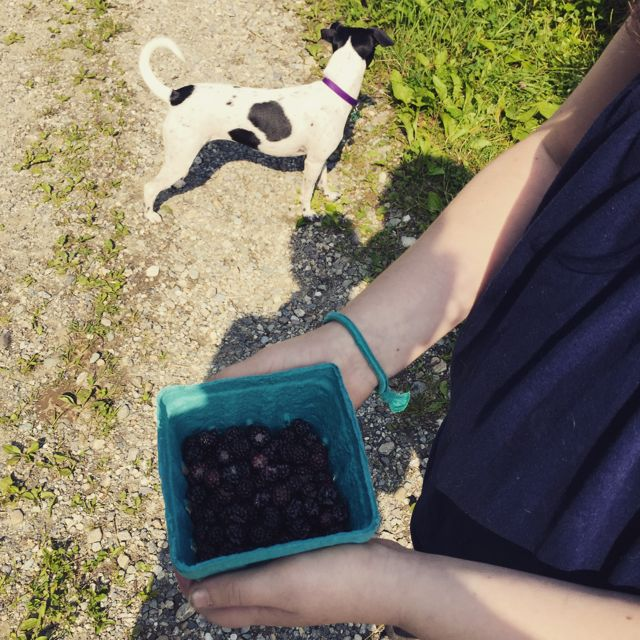 dog with berries