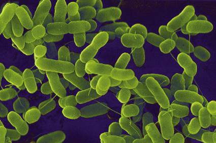 E_coli_