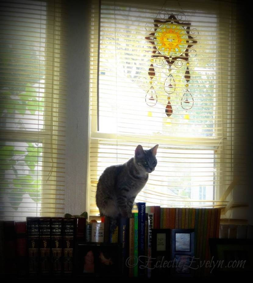 Window Light #WordlessWednesday EclecticEvelyn.com
