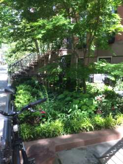 Old Small Urban Spaces In A Tight Spot Landscape Design A Tight Spot Landscape Design Small Urban Spaces Re Landscaping Front Yard Re Landscaping My Yard