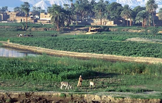 agricultural farmland as an unstable ecosystem and its impact Agricultural economics: a country does not normally develop industrially until its farm areas can supply its not only are incomes in agriculture unstable.