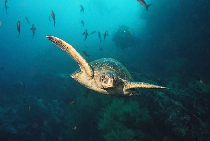 050 Galapagos
