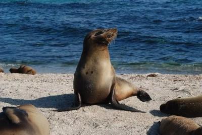 sea-lion-01