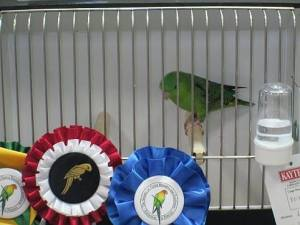 2nd Best in Show winner at the BOAF show on Sept. 12, 2015
